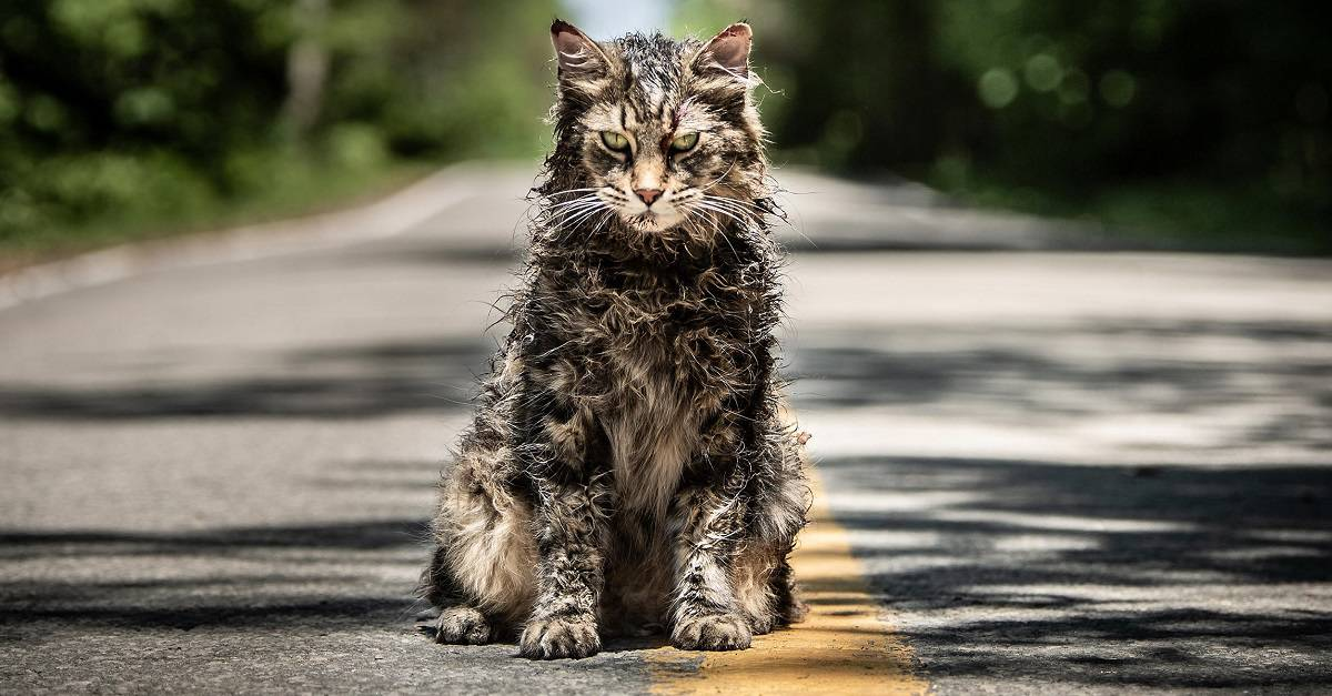 Horror Movie News: Pet Sematary Trailer Released